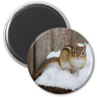 Cute Chipmunk in the Snow Magnet