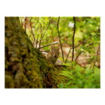 Cute Chipmunk in the Woods Posters