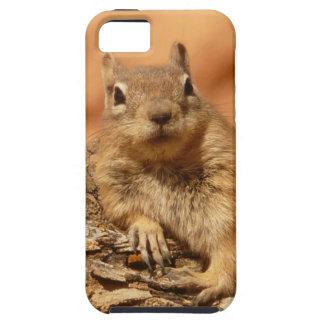 Cute Chipmunk iPhone SE/5/5s Case
