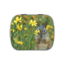 Cute Chipmunk Jelly Bean Gifts Jelly Belly Tin