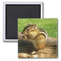 Cute Chipmunk Magnet