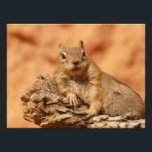 "Cute Chipmunk Photo Print<br><div class=""desc"">Really cute and cool chipmunk makes every single product and gift funny and awesome! This cool chipmunk closeup photo can be found on many different gift ideas that everyone will just love to receive!</div>"