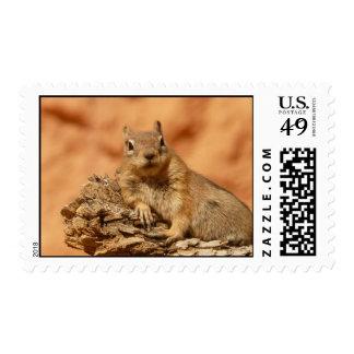 Cute Chipmunk Postage Stamps
