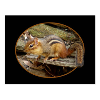 Cute Chipmunk Postcard
