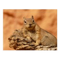 Cute chipmunk postcard