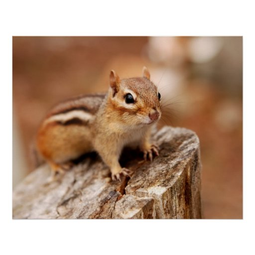 Cute Chipmunk Poster