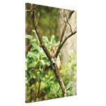 Cute Chipmunk Sitting in a Tree Gallery Wrapped Canvas