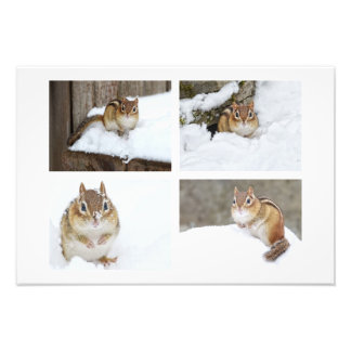 Cute Chipmunk Sitting in the Snow 4 Photo Collage