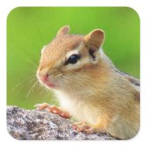 Cute Chipmunk Square Sticker