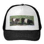 Cute Chocolate & Black Belted Calves Trucker Hat