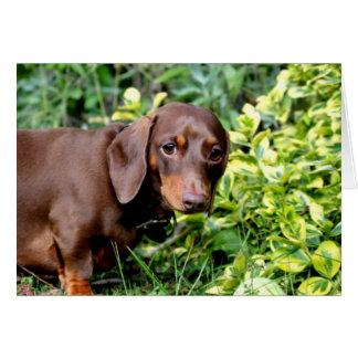 Cute chocolate dachshund blank greeting card