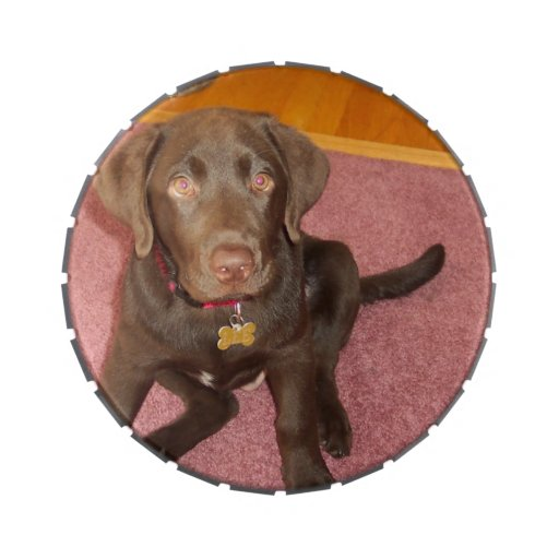 Cute Chocolate Lab Candy Tins
