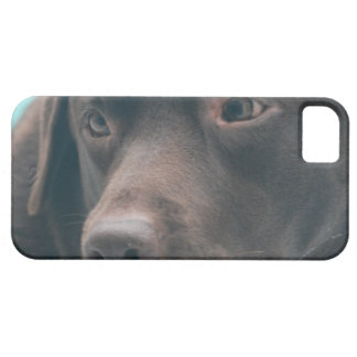 Cute Chocolate Lab iPhone 5 Cases