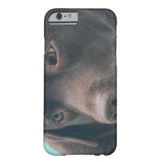 Cute Chocolate Lab iPhone 6 Case