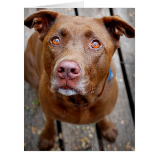 Cute Chocolate Lab Pit Mix Dog 7 Card