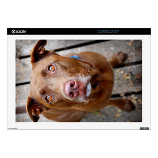 Cute Chocolate Lab Pit Mix Dog 7 Decals For Laptops