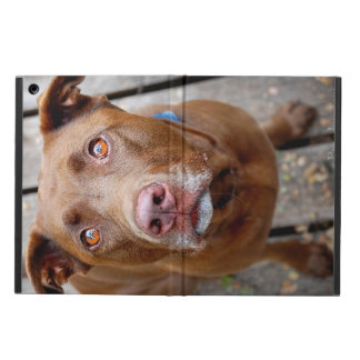 Cute Chocolate Lab Pit Mix Dog 7 iPad Air Cover