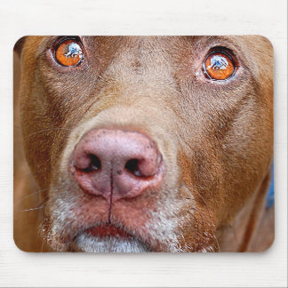 Cute Chocolate Lab Pit Mix Dog 7 Mouse Pad