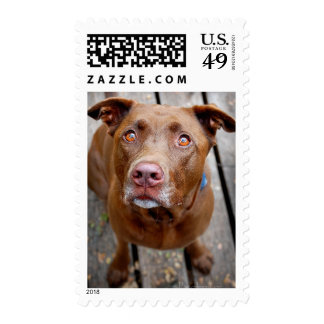 Cute Chocolate Lab Pit Mix Dog 7 Postage