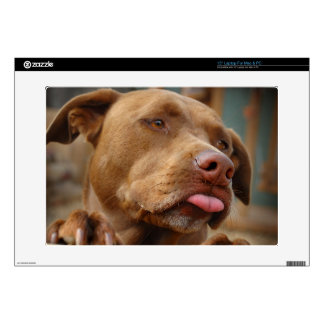 "Cute chocolate Lab Pit Mix Dog Decals For 15"" Laptops"