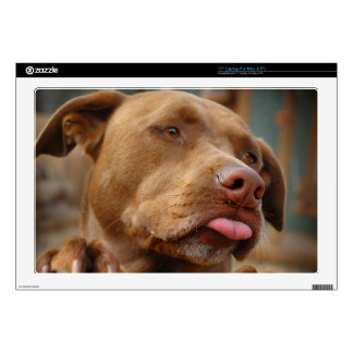 Cute chocolate Lab Pit Mix Dog Decals For Laptops