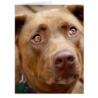 Cute Chocolate Lab Pit Mix Dog Portrait 5 Card