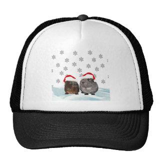 Cute Christmas Guinea pigs in Santa Hats