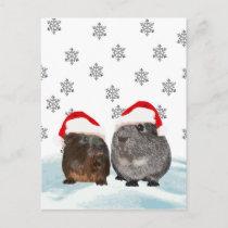 Cute Christmas Guinea pigs in Santa Hats Holiday Postcard
