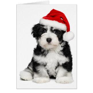 Cute Christmas Havanese Puppy Dog 2 Greeting Card