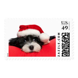Cute Christmas Havanese Puppy Dog Postage