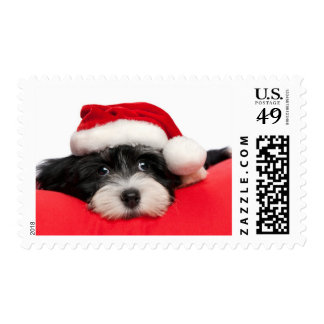Cute Christmas Havanese Puppy Dog Postage Stamp