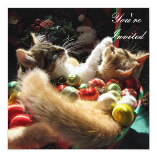Cute Christmas Kittens in Love on Xmas Eve Card