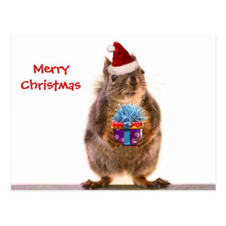 Cute Christmas Squirrel and Gift Postcard