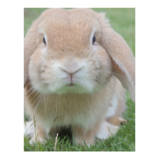 Cute Chubby Bunny Letterhead