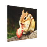 Cute Chubby Chipmunk with Strawberry Stretched Canvas Print