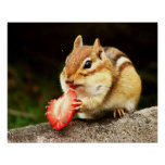 Cute Chubby Chipmunk with Strawberry Print