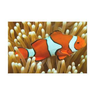 Cute Clownfish Canvas Print