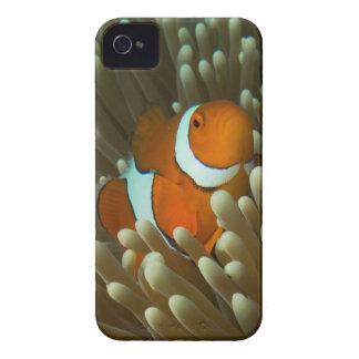 Cute Clownfish Great Barrier Reef Coral Sea iPhone 4 Case-Mate Case