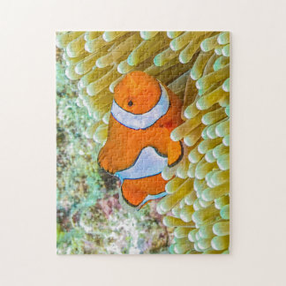 Cute Clownfish Great Barrier Reef Coral Sea Jigsaw Puzzle