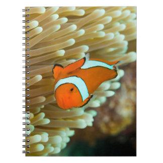 Cute Clownfish Great Barrier Reef Coral Sea Notebook