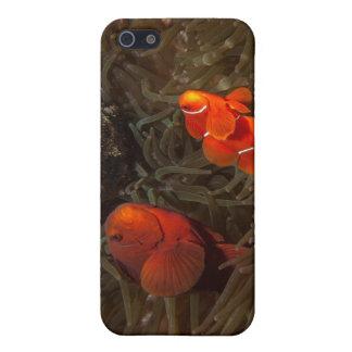 cute clownfish - iPhone4 case