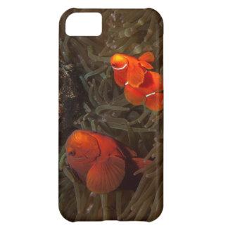 Cute Clownfish iPhone 5 Case