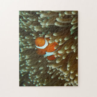 Cute Clownfish Jigsaw Puzzle
