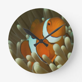 Cute Clownfish on the Great Barrier Reef Round Clocks