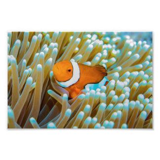 Cute Clownfish Photo Print