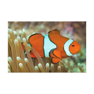 Cute Clownfish Wrapped Canvas
