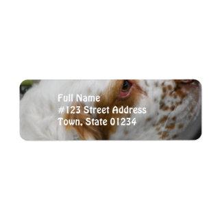 Cute Clumber Spaniel Custom Return Address Labels