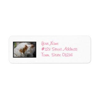 Cute Clumber Spaniel Labels