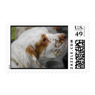 Cute Clumber Spaniel Postage