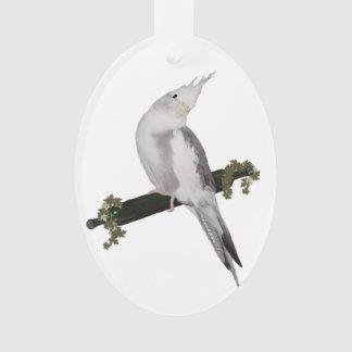 Cute Cockatiel on Ivy Perch